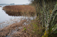 RSPB Loch of Kinnordy Nature Reserve, Kingoldrum, Angus, Scotland.