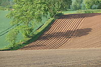 Planted potato field, Pensax, Worcestershire.