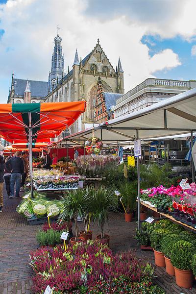 Flower market and Grote Kerk, Haarlem, Netherlands,