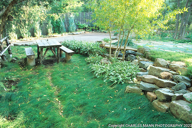 Gardener Susan Crayson created a lush green lawn at her Santa Fe home by using  Sheeep Fescue, Festuca ovina, a shade tolerant and drought tolerant native grass.