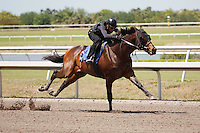 #5Fasig-Tipton Florida Sale,Under Tack Show. Palm Meadows Florida 03-23-2012 Arron Haggart/Eclipse Sportswire.