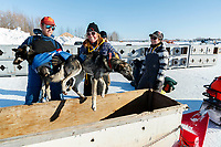 Volunteers unload dropped dogs from a sled to be put into transport kennels at the Galena checkpoint during the 2017 Iditarod on Friday afternoon March 10, 2017.<br /> <br /> Photo by Jeff Schultz/SchultzPhoto.com  (C) 2017  ALL RIGHTS RESERVED