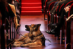 Assistant dog during 37 Sport Gala - National Sports Awards 2017. March 6,2017. (ALTERPHOTOS/Acero)