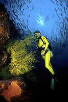 An enormous school of tuna can be seen behind this diver (MR) and yellow polyp black coral, Antipathes galapagensis. Gordo Bank, Sea of Cortez, Mexico.