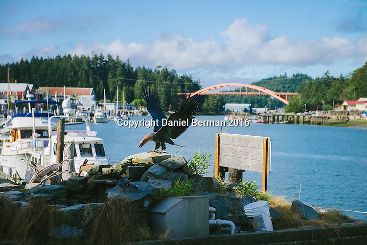 A view of the La Conner pier and Rainbow Bridge, overlooking the Swinomish Channel in the Skagit Valley, Washington state. Photo by Daniel Berman/www.bermanphotos.com