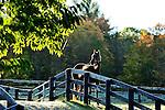 .HORSES  FALL 2012.