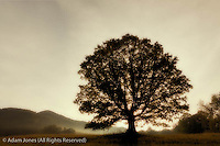 Single tree at sunrise, Cades Cove, Great Smoky Mountains National Park, Tennessee