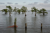 Lake Matamuskeet, near Fairfield in Hyde County, NC Monday, May 7, 2018. (Justin Cook for The Guardian)