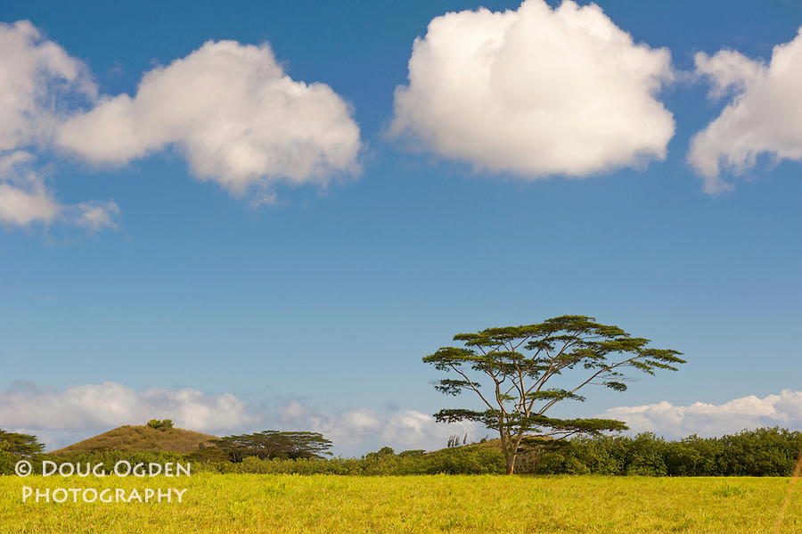 African Tree and Clouds near Po'ipu,  Kauai, Hawaii