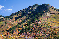 Autumn Fall Colors, Unita National Forest, Utah, USA.
