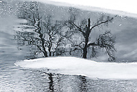 """""""BULL RIVER COTTONWOODS-2""""<br /> <br /> (1) 43 X 30 canvas print $3,000<br /> (1) 36 X 24 canvas print $2,400<br /> <br /> 17 x 12.5 signed paper print<br /> 1/50 $110.00<br /> <br /> <br /> <br /> <br /> <br /> <br /> Cottonwoods reflecting on the Bull River, B.C. The trees seemingly growing out of an ice island"""