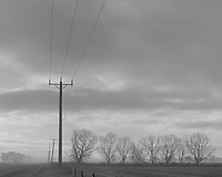 Like Calls to Like<br /> <br /> Trees and Powerpole in Mist<br /> Horsham<br /> 2011