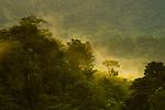 Semi-deciduous tropical moist rainforest with mist, Mamoni Valley, Panama