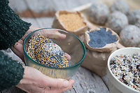 Meisenknödel selbermachen, Meisenknödel selber machen, Schritt 3: Fettfutter wurde zu Kugel geformt und wird anschließend in einer Schale mit Hirsesamen und Mohnsaat geschwenkt bis schließlich die Kugeloberfläche von Körnern bedeckt ist. Selbstgemachte Fettfuttermischung, Fettfutter wird zu Kugeln, Knödeln, Meisenknödel geformt und anschließend durch Körner gerollt, Fettfutter aus Kokosfett, Sonnenblumenkernen, Erdnussbruch, Körnermix, Körnermischung, Sonnenblumenöl, Vogelfutter selbst herstellen, Vogelfutter selber machen, Vogelfutter selbermachen, Vogelfütterung, Fütterung, bird's feeding