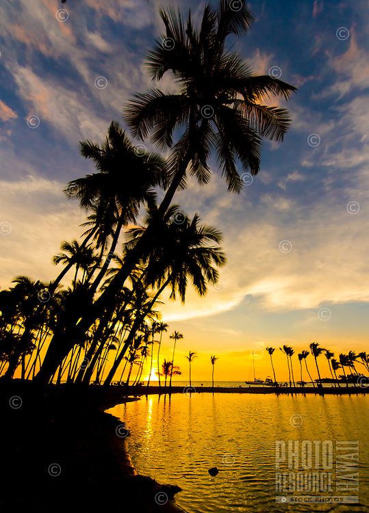 Silhouetted palm trees seem to lean into a colorful sunset at 'Anaeho'omalu Bay, Waikoloa Beach, Big Island.