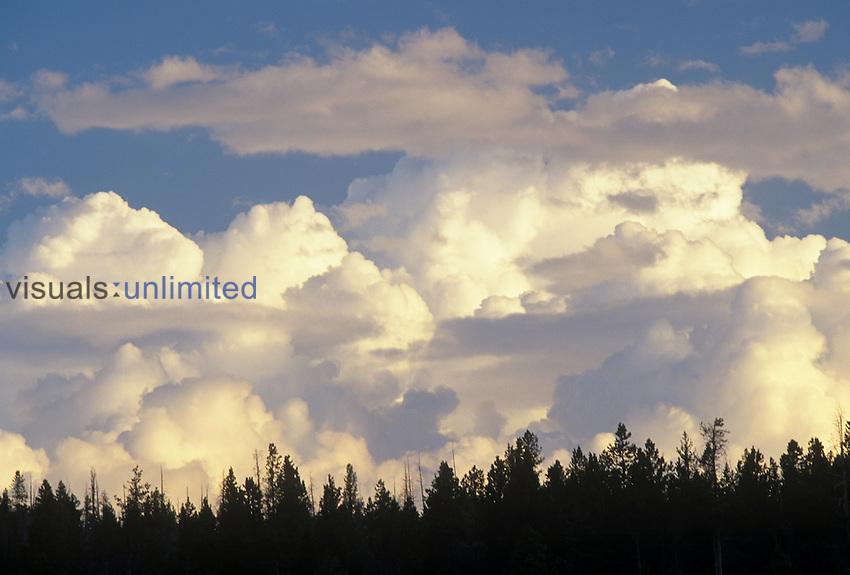 Cumulus clouds building into thunderheads or cumulonimbus clouds...