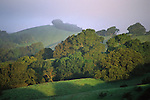 Green hills and oak trees in morning mist in spring on Lafayette Ridge, Lafayette, CALIFORNIA