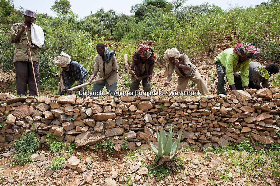 Ethiopia, Tigray region, Kola District. As part of the World Bank funded Sustainable Land Management Program, the whole community, men as well as women, work relentlessly to prevent erosion and land degradation by planting local species of trees.
