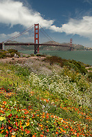 The park near the San Francisco side sports wildflowers of all sorts, San Francisco, California