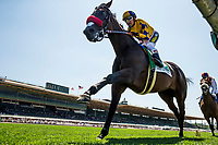 ARCADIA, CA - MAY 27: Mokat and Rafael Bejarano up in the Gamely Stakes at Santa Anita Park  on May 27, 2017 in Arcadia, California. (Photo by Alex Evers/Eclipse Sportswire/Getty Images)
