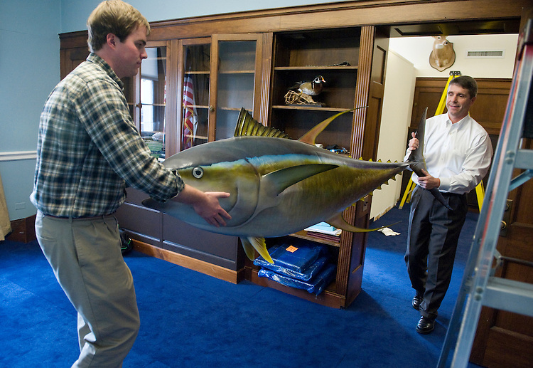 UNITED STATES - DECEMBER 14:  Rep. Rob Wittman, R-Va., right, and staff assistant Gordon Neal, carry a stuffed yellowfin tuna while moving into 1317 Longworth Building from 1318.  Wittman caught the 308 pound fish in the Pacific Ocean off the coast of Mexico.  (Photo By Tom Williams/Roll Call)
