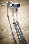 Stray dog, Seville, Spain