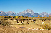 67545-09518 Horses and Grand Teton Mountain Range in fall, Grand Teton National Park, WY