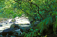Stream with rushing water and green foliage off the road to Hana, island of Maui