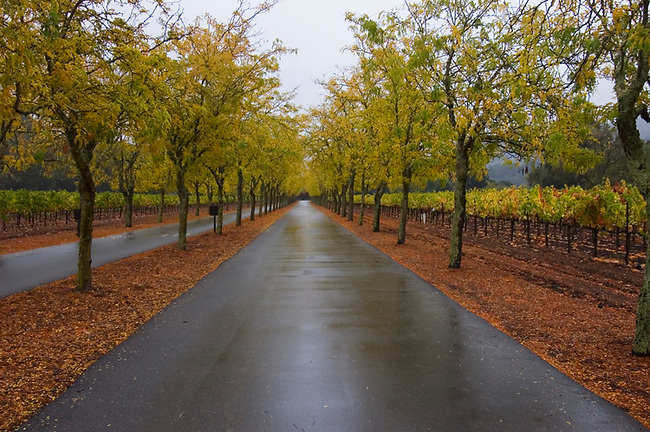 Entrance to Sterling Vineyards, Calistoga, California