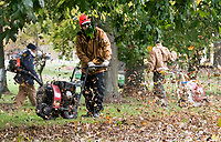 The annual battle with leaves, a little later than normal, has begun in earnest. The leaf clean-up at the Sarnia Golf and Curling Club will keep a grounds crew of five busy until the end of November. Here Wayne Pegg and two other grounds keepers blow leaves into large piles for collection.