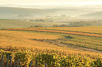 France, Cher (18), région du sancerrois, Sancerre, vignoble de Sancerre en automne et les brumes du matin // France, Cher, Sancerre region, Sancerre, Sancerre vineyards in autumn and the morning mist