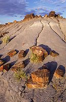 Petrified wood slices at Petrified Forest national park in Arizona, USA