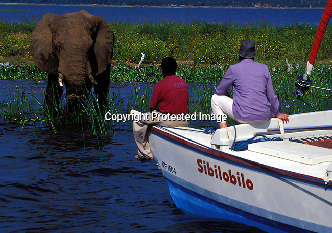 dicozim00261.African Country. Zimbabwe. A Kariba elephant walking the water as a sailing boat with tourists on April 15, 2003 on Lake Kariba, a lake in Zimbabwe.  Wildlife, tourist destination, water, transport, boats, hat. .©Per-Anders Pettersson/iAfrika Photos.