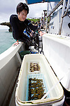 A volunteer participating in the Team Tyura Sango coral reef restoration project looks at a cooler box containing pieces of coral to  be planted in the bay at Onna Village, Okinawa Prefecture, Japan, on Saturday, June 23, 2012. Photographer: Robert Gilhooly