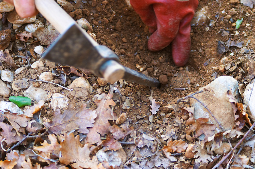 A pick and a hand uncovering a truffle at La Truffe de Ventoux truffle farm, Vaucluse, Rhone, Provence, France