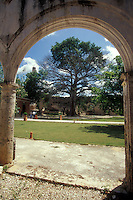 Giant ceiba tree framed by an arch at Hacienda Uaymon, Campeche state, Mexico