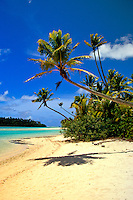 Palm Trees on a picture perfect beach on an uninhabited island in Aitutaki Lagoon, Cook Islands in the South Pacific.