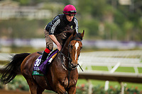 DEL MAR, CA - NOVEMBER 02:   Highland Reel, owned by Derrick Smith, Mrs. John Magnier & Michael Tabor and trained by Aidan P. O'Brien, exercises in preparation for Longines Breeders' Cup Turf  at Del Mar Thoroughbred Club on November 02, 2017 in Del Mar, California. (Photo by Alex Evers/Eclipse Sportswire/Breeders Cup)