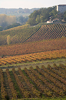 Europe/France/Midi-Pyrénées/81/Tarn/ Cahuzac-sur-Vère: le Vignoble AOC Gaillac du Château de Salettes