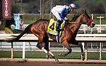 ARCADIA, CA: #4 Venetian Harbor with jockey Flavien Prat win the Grade II Las Virgenes Stakes at Santa Anita Park in Arcadia, California on February 08, 2020.