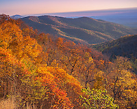 Shenandoah National Park, VA: A fall colored hillside of deciduous trees and layered Shenadoah Mountains from Tunnel View at sunrise