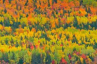 Autumn colors of mixedwood forest in Les Notre-Dame Mountains (Appalachian Mountains). Great Lakes - St.  Lawrence Forest Region.<br />Saint-Pacôme<br />Quebec<br />Canada