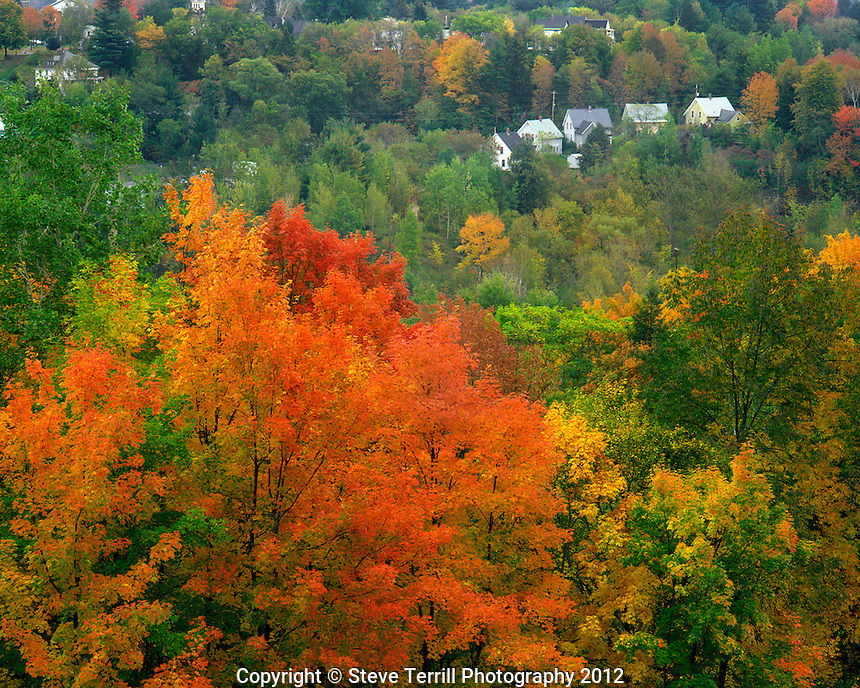 Hillside of trees and homes near Saint Johnsbury Vermont