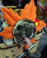 A bulldog called Kagai at the Osaka Pet Expo and fashion show, Osaka, Japan.<br /> 25-Sep-11<br /> <br /> Photo by Richard Jones
