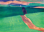 winding dirt road through spring wheat field in the Palouse Hills of Eastern Washington, USA