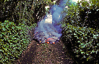 Destructive lava flows down a road in Kalapana with lush green foliage on either side.