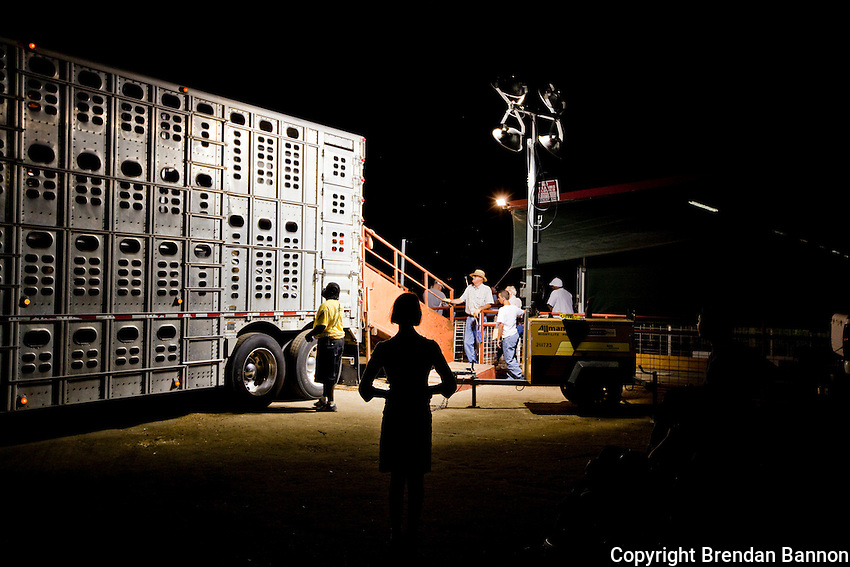 A girl watching Hogs get loaded at the close of the Kern County Fair. Bakersfield, CA.