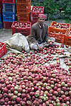Local man sorting apples in Vashisht in the Kullu Valley, Himachal Pradesh, India.