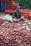 Local man sorting apples in Vashisht in the Kullu Valley, Himachal Pradesh, India.