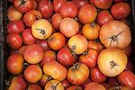 Tomatoes, Arta, Mallorca
